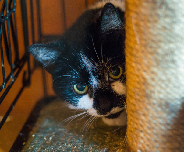 Cat action trust nuneaton